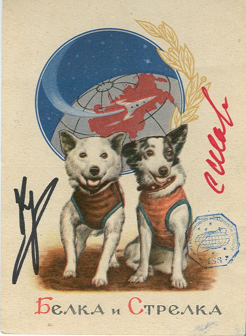 # sd099 Belka-Strelka old 1961 flown in space postcard 1
